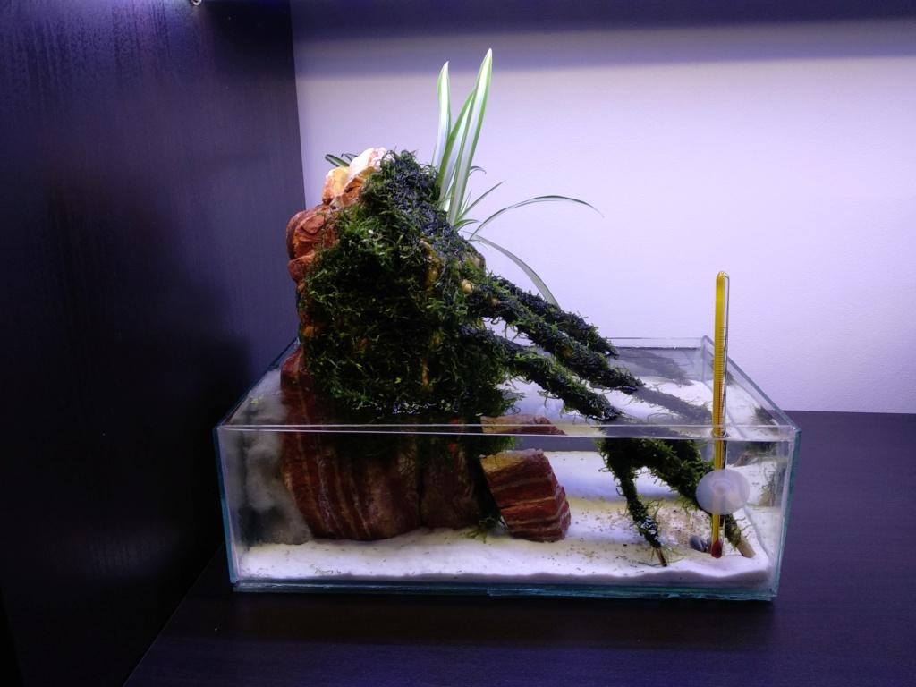 Aquarium 20 litres récupération Img_2091