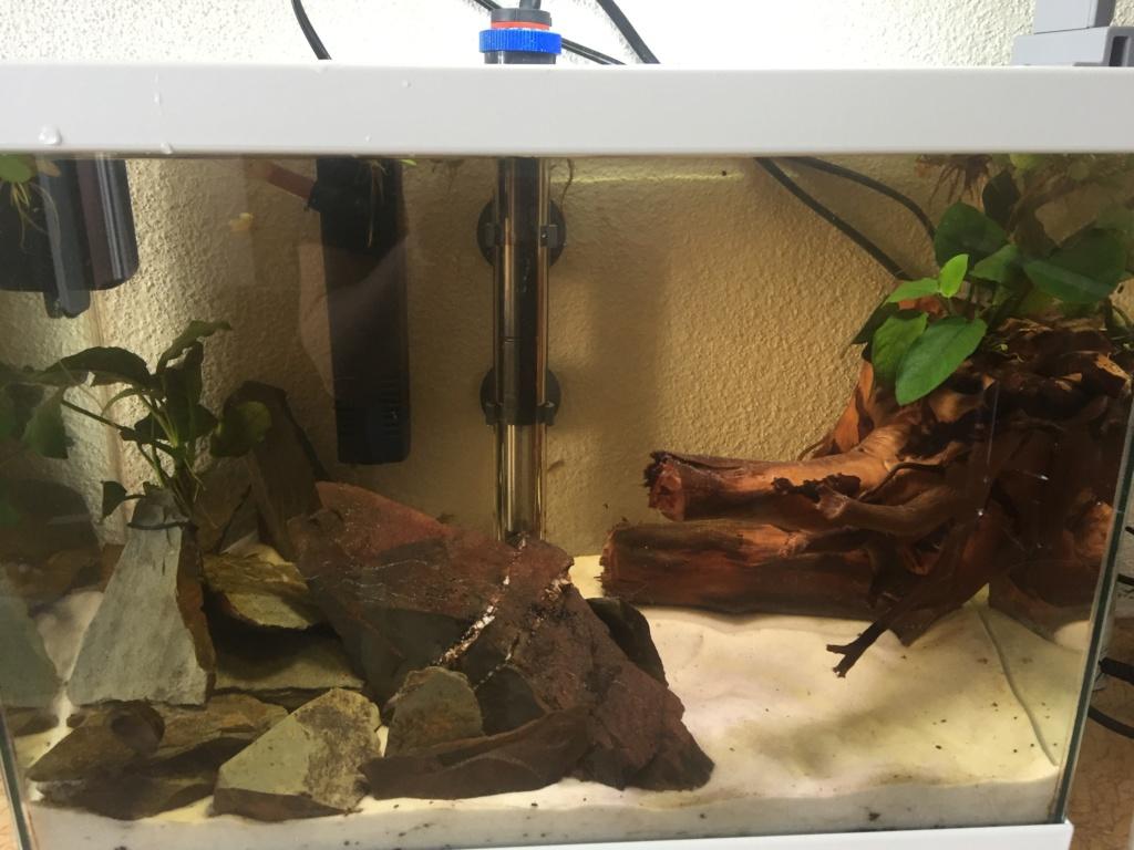 Lancement aquarium 60l et 20l D4fa7610
