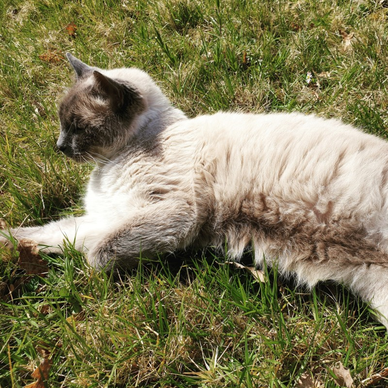 Les chats gribouillons de Ninon 20190410