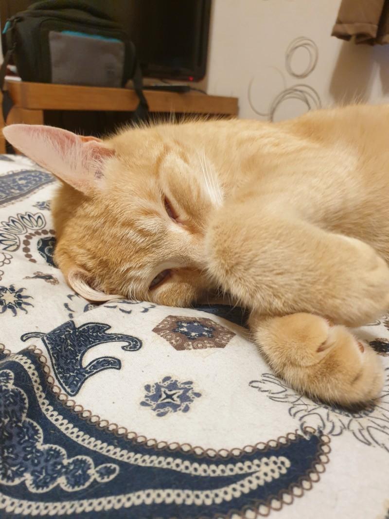 Les chats gribouillons de Ninon 20190411