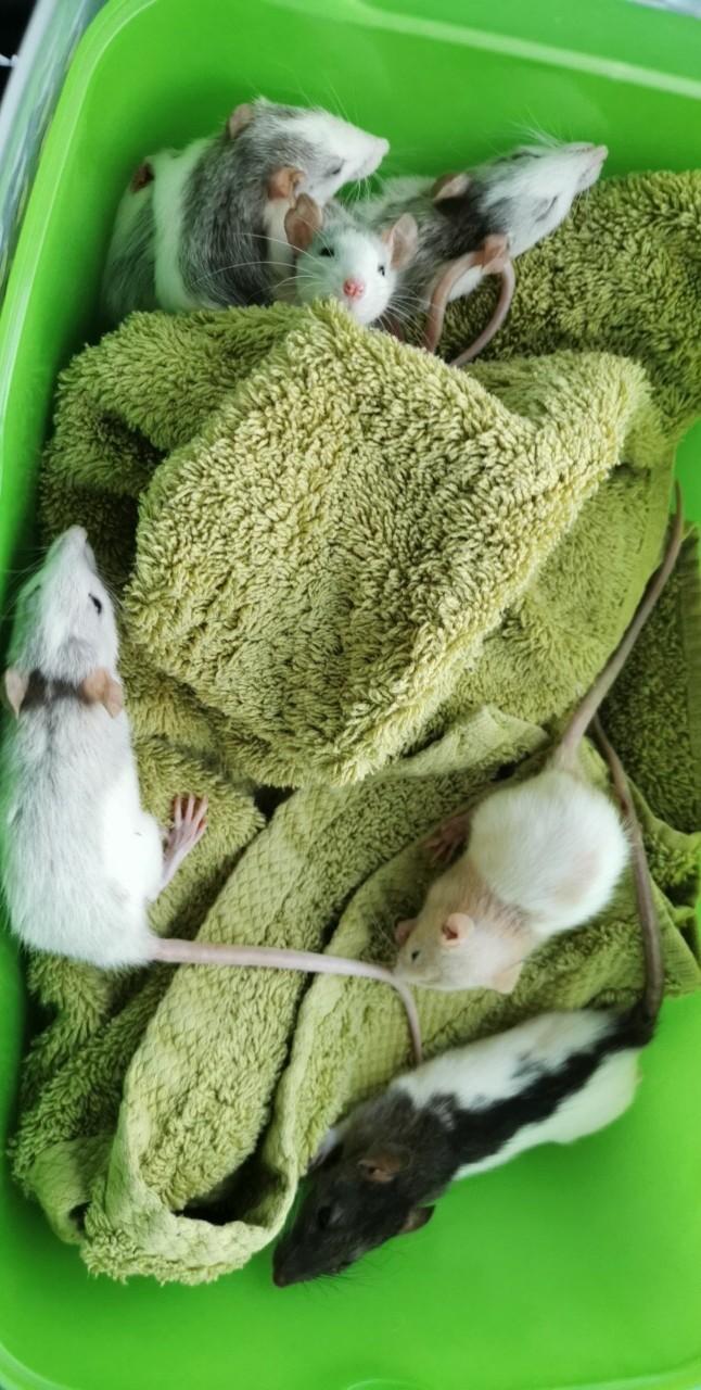Sauvetage 7 ratons de 20 à 30jours ??  Img_1510