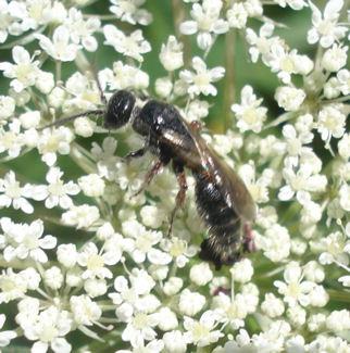 petit entomologiste en herbe Bebete10