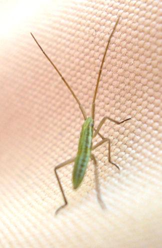 petit entomologiste en herbe Bebete11
