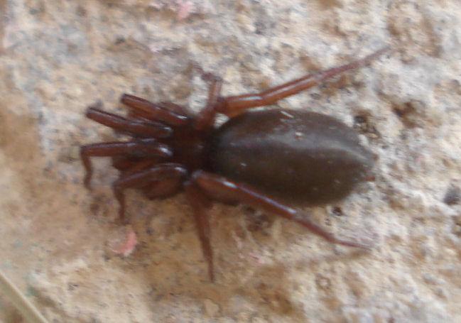 petit entomologiste en herbe Bebete12