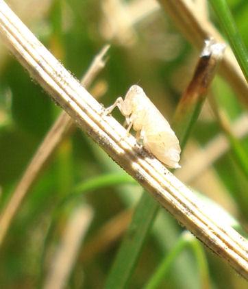 petit entomologiste en herbe Bebete13