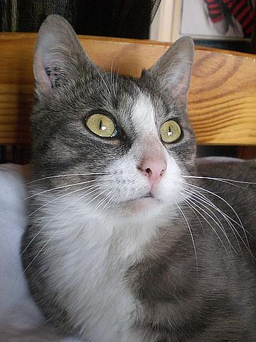 Chathuttes satirés 65 Chats Monamo10