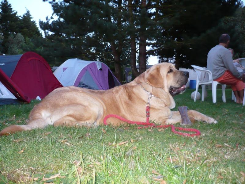 clifford en camping P1010811