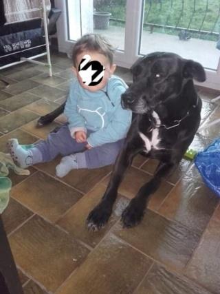 Emy, croisée labrador de 1 an Img_2012