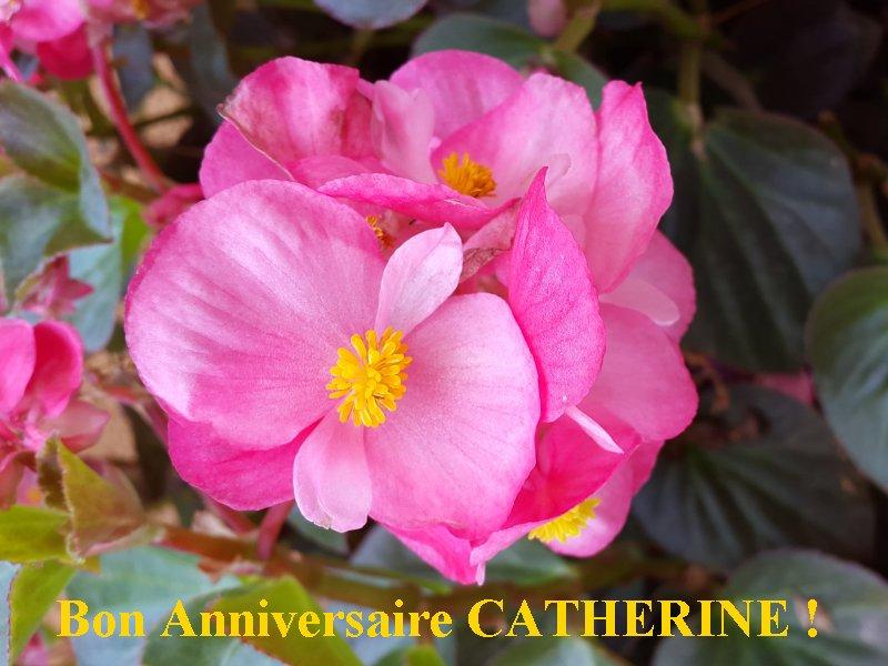 Bon anniversaire Catherine Anicat10