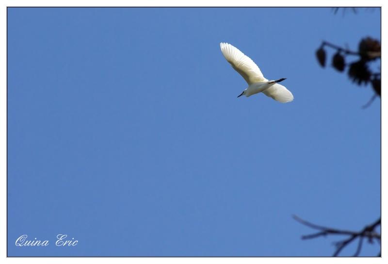 La cage aux oiseaux Imgp4611