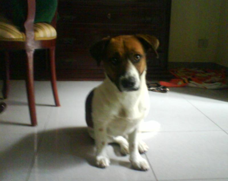 Fotos del perrito abandonado y recogido temporalmente...NECESiTA CASA DE ACOGIDA!!! Dsc00114