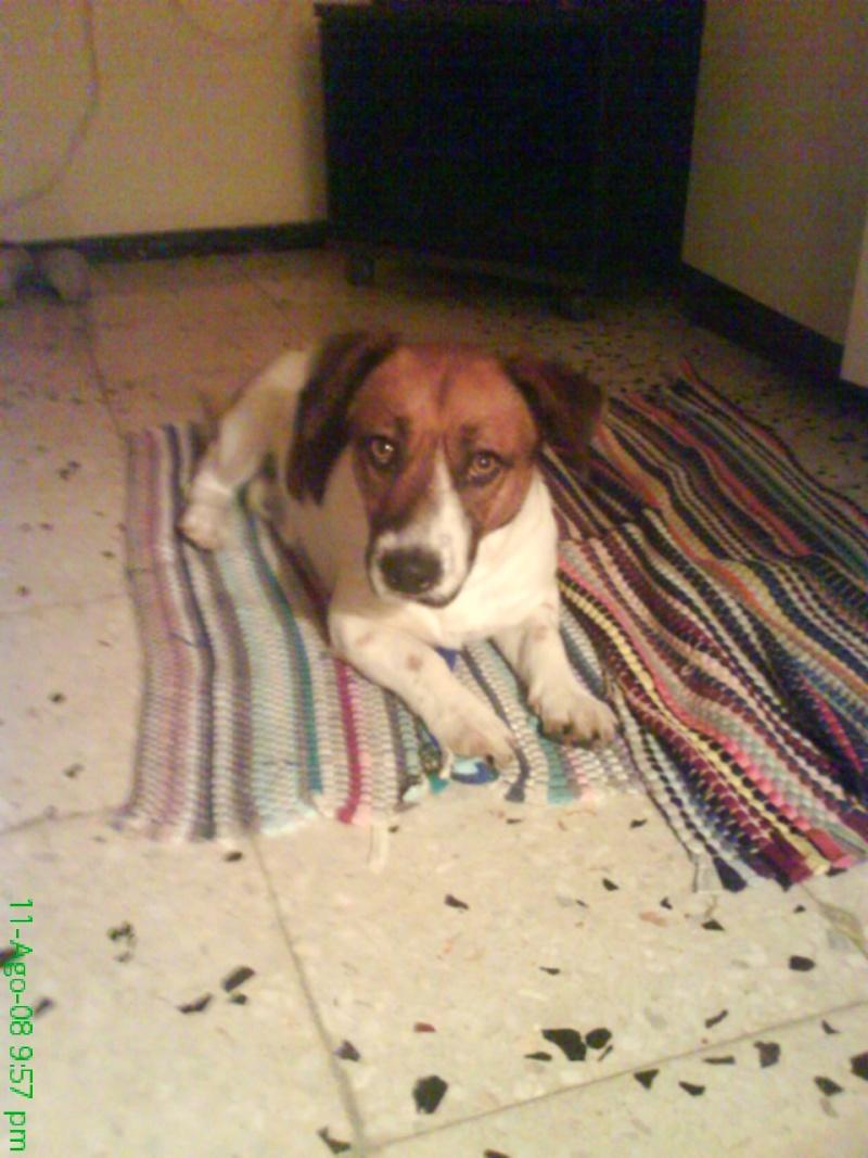 Fotos del perrito abandonado y recogido temporalmente...NECESiTA CASA DE ACOGIDA!!! Dsc04724