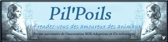 Pil'Poils 188wi910
