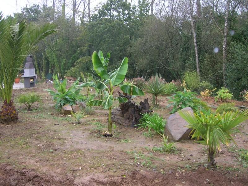 Quelques nouvelles du futur jardin - Page 2 Dscn1222