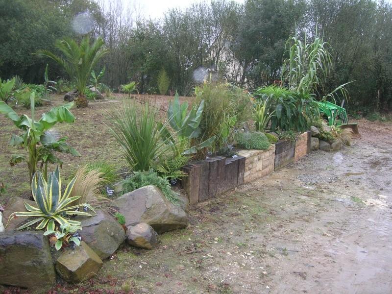 Quelques nouvelles du futur jardin - Page 2 Dscn1223