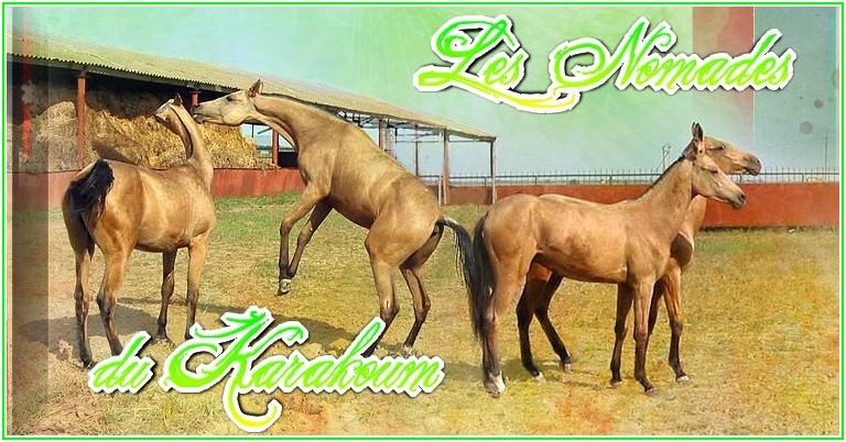 Nomades du Karakoum
