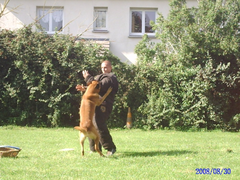 WORLD WORKING DOG - Portail Pict0014