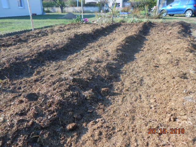 fumier de cheval ou compost mur - Page 2 Dscn4480