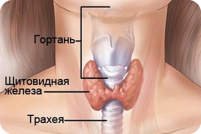 Аюрведа лечение щитовидной железы 2d603e10