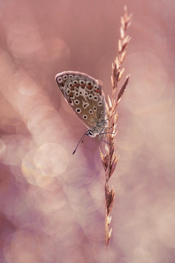 papillon d'été ( corrigé) Dsc09223