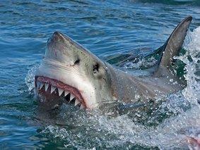 Spécial Humour Requin10