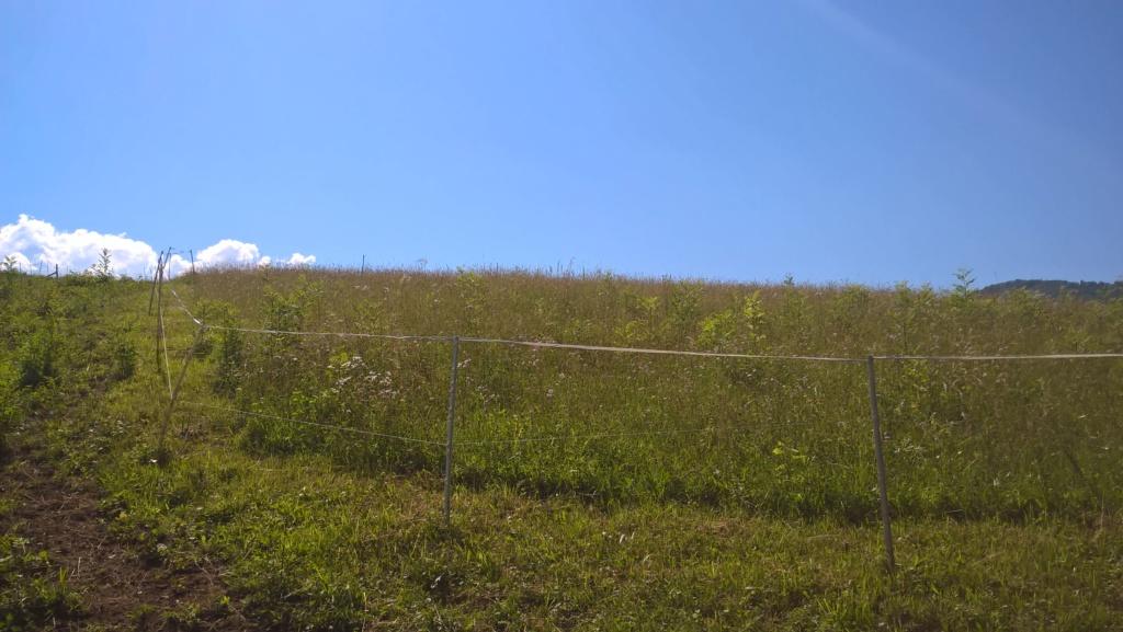 Une place au parc à Venon, contre participation surveillance Wp_20114