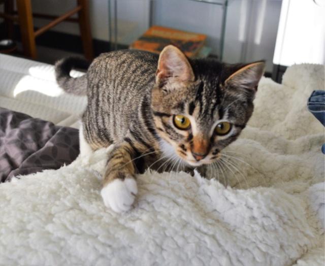 OMEGA, chatonne tigrée et blanche, née vers le 14/06/18 Dsc_0220