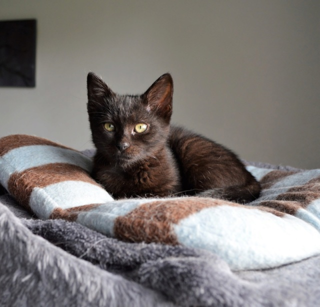 OSTIE, chatonne noire née vers le 08/10/18 Dsc_0250