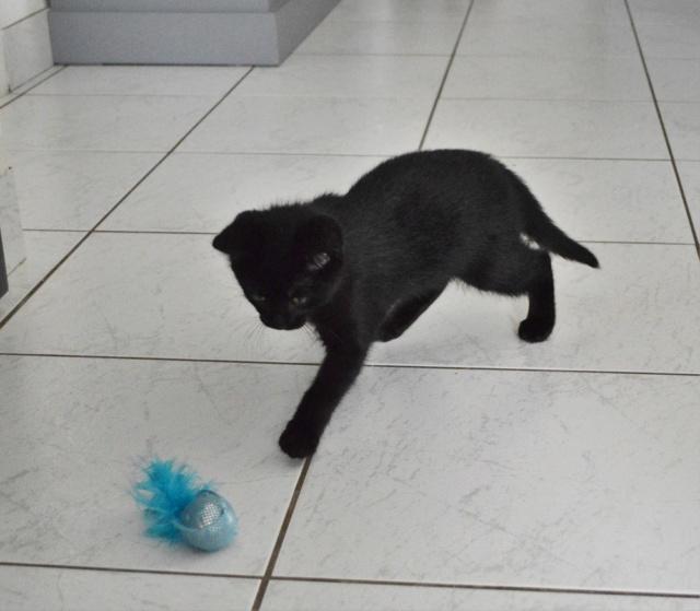 POUPINETTE, chatonne noire née le 20/04/19 Dsc_0327