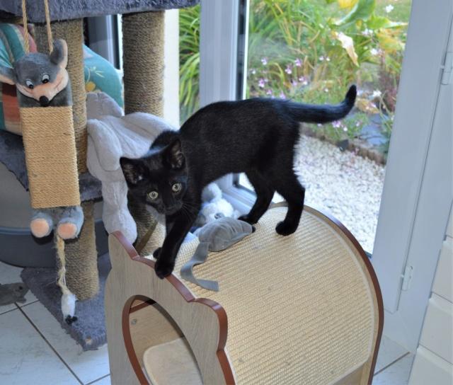 POUPINETTE, chatonne noire née le 20/04/19 Dsc_0335