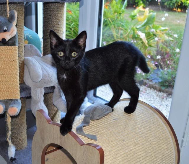 POUPINETTE, chatonne noire née le 20/04/19 Dsc_0336
