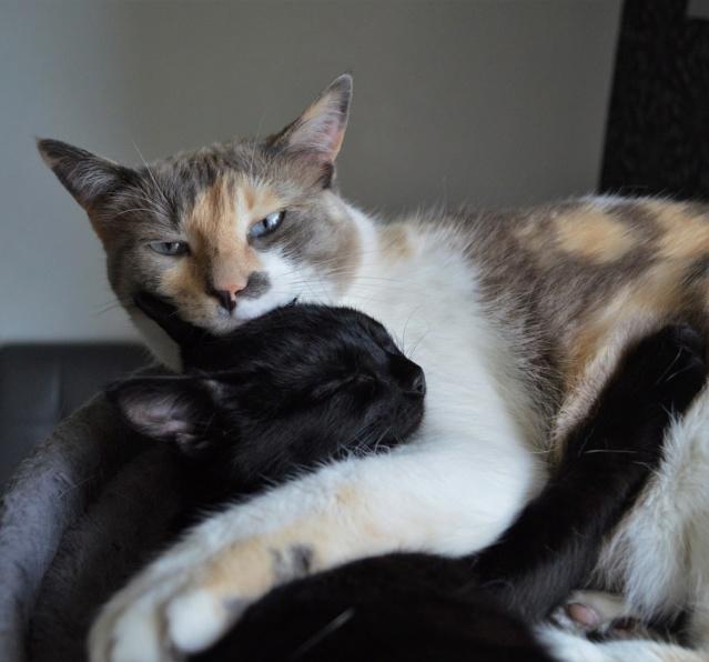 POUPINETTE, chatonne noire née le 20/04/19 Dsc_0348