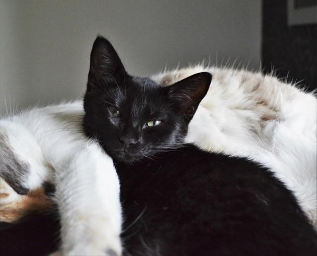 POUPINETTE, chatonne noire née le 20/04/19 Dsc_0350