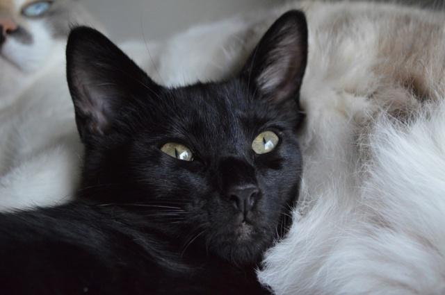POUPINETTE, chatonne noire née le 20/04/19 Dsc_0351