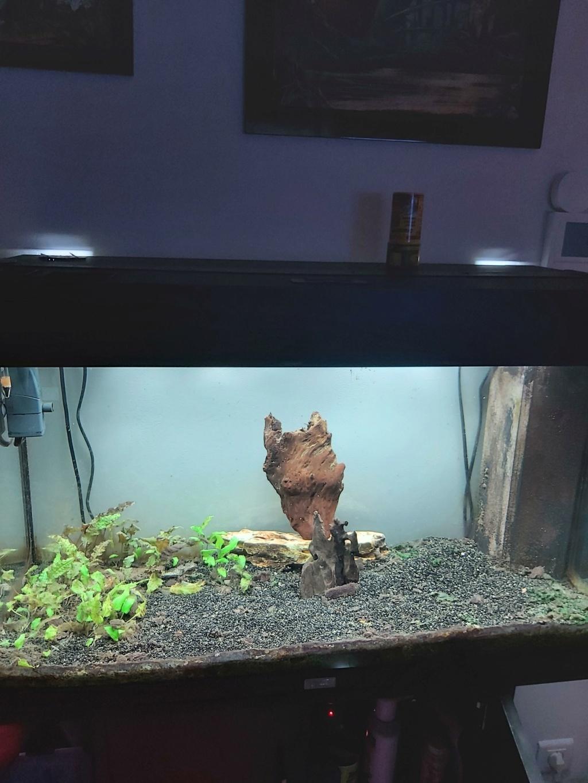Refonte aquarium 125 L 20210710