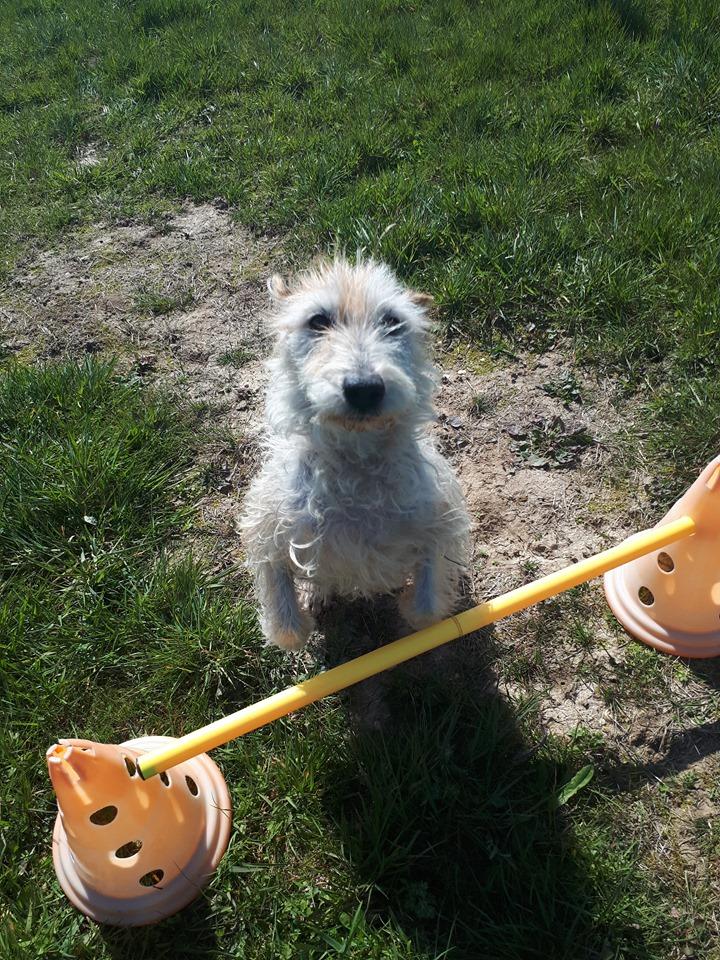 Dobby - mâle x Fox terrier (01/01/2010)  660