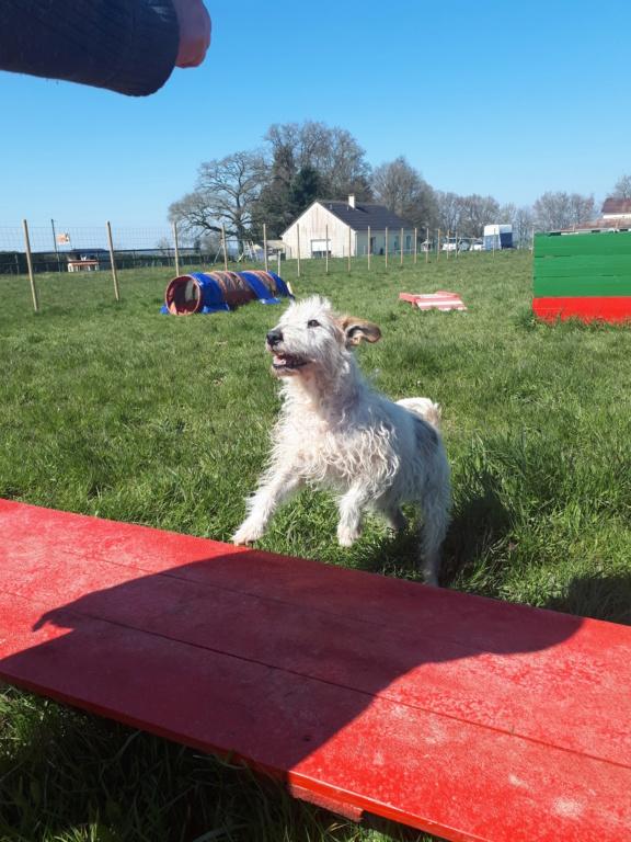 Dobby - mâle x Fox terrier (01/01/2010)  758