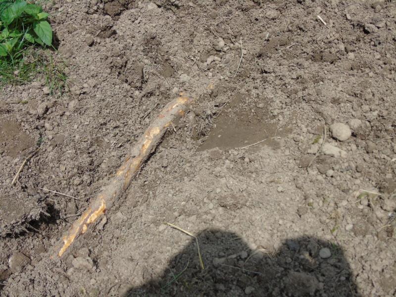Projet et réalisation d'un bassin pour stenotherus odoratus Dsc03432