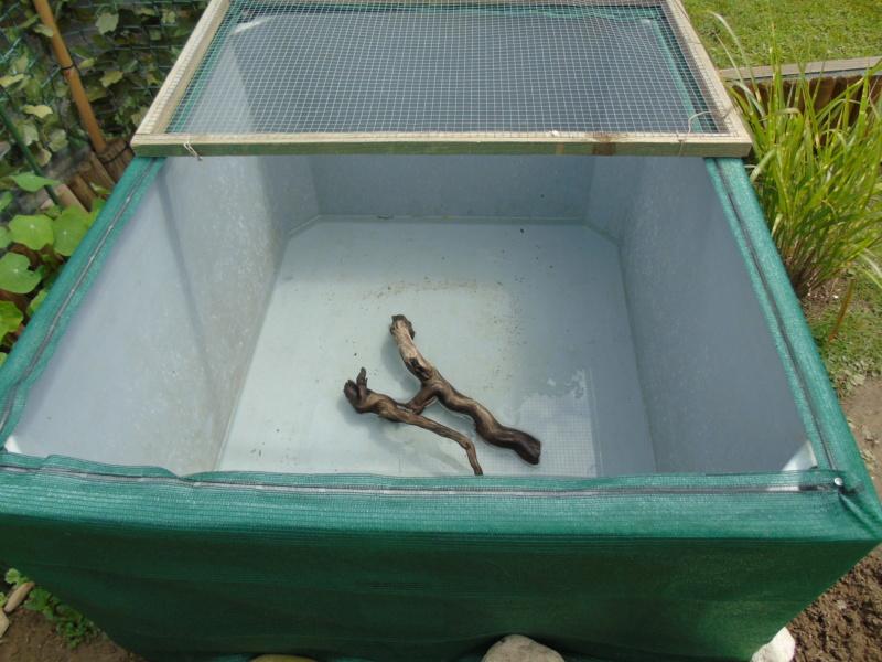 Projet et réalisation d'un bassin pour stenotherus odoratus Dsc03436