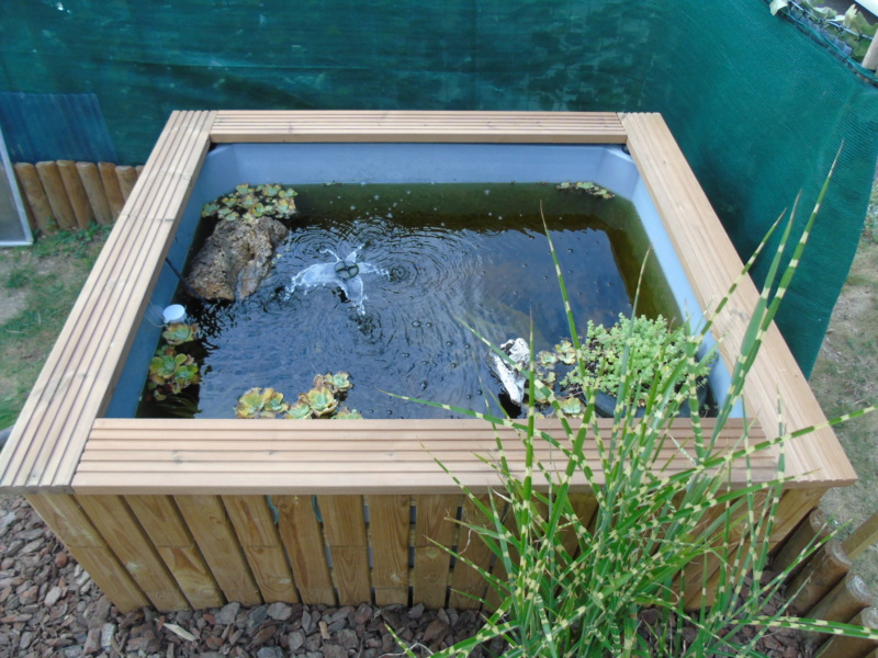 Projet et réalisation d'un bassin pour stenotherus odoratus Dsc03651