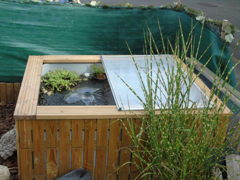 Projet et réalisation d'un bassin pour stenotherus odoratus Dsc03652