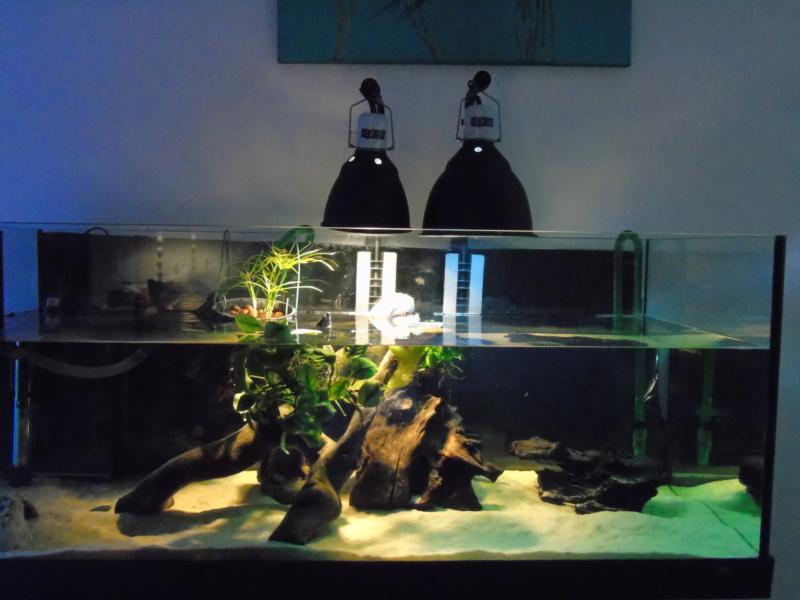 Projet et réalisation d'un bassin pour stenotherus odoratus Dsc03661