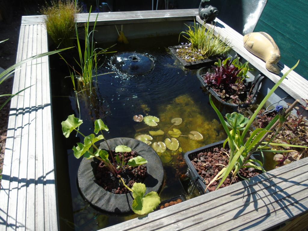 Projet et réalisation d'un bassin pour stenotherus odoratus - Page 4 Dsc04330