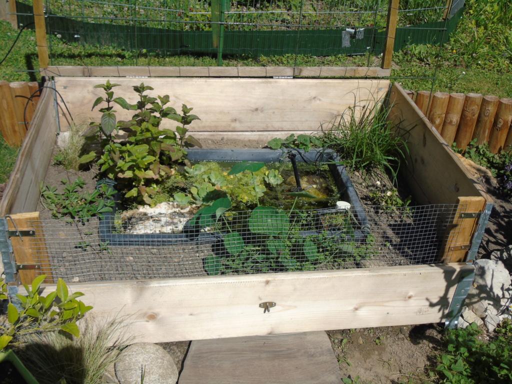 Futur petit extérieur d'été pour mes stenotherus odoratus - Page 4 Dsc04413