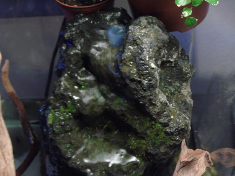 Aquarium des deux petites odoratus avec poissons. - Page 2 Dsc04619