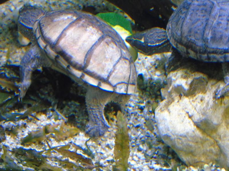 Aquarium des deux petites odoratus avec poissons. - Page 2 Dsc04630