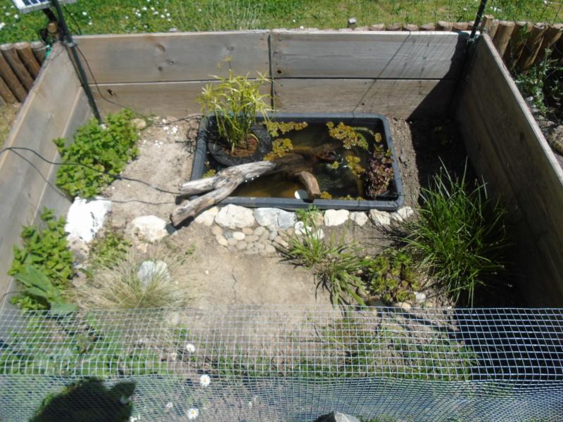 Futur petit extérieur d'été pour mes stenotherus odoratus - Page 7 Dsc04823