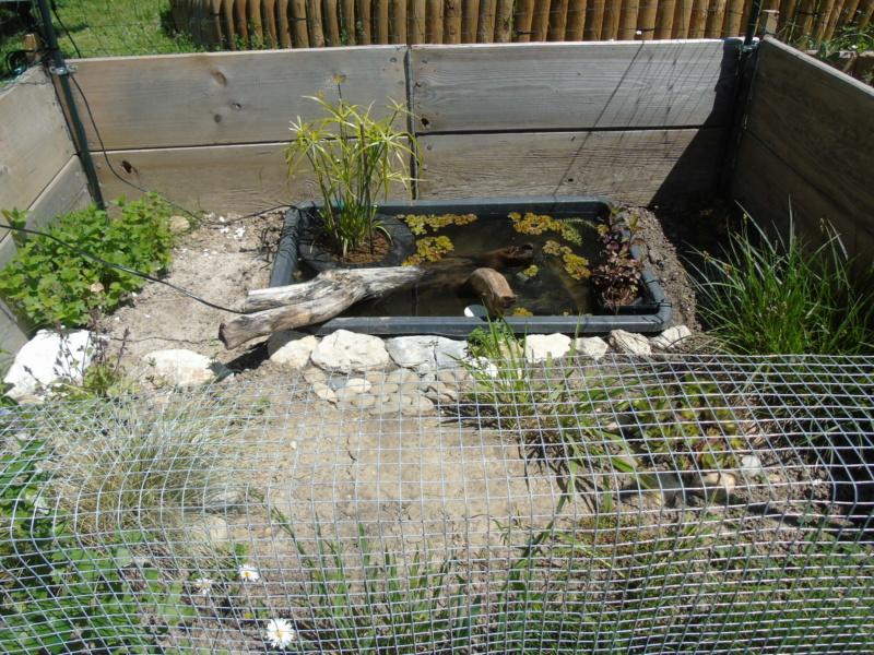 Futur petit extérieur d'été pour mes stenotherus odoratus - Page 7 Dsc04824