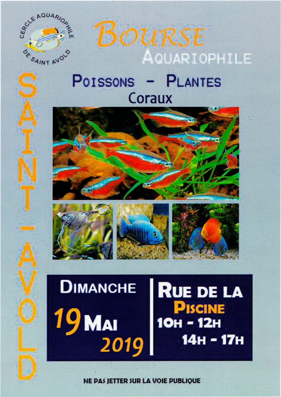 Bourse Saint-Avold (57) - 19 Mai 2019 Img_2010