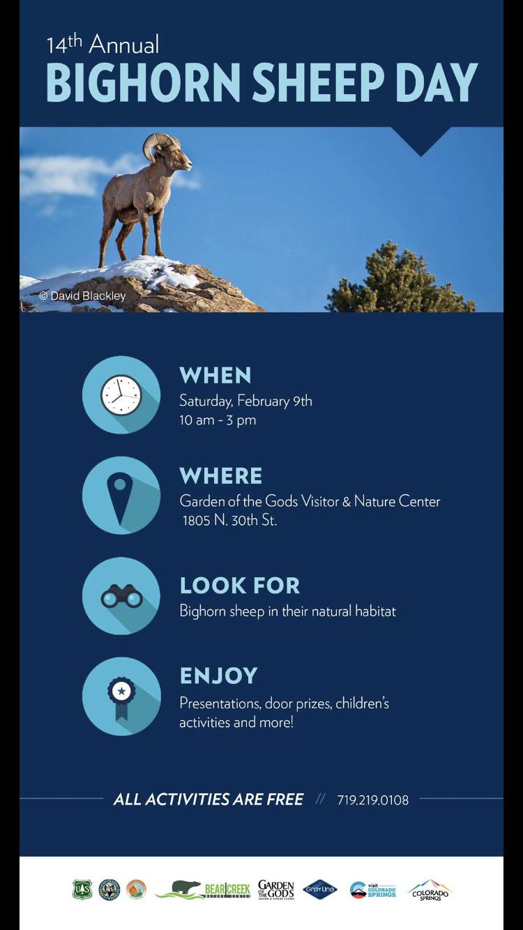 Bighorn Sheep Day 679cd010